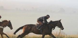 polskie konie sportowe